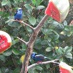 Birds feeding across from dining room