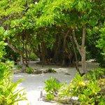 The inside of the beautiful picnic island Devaamagalla
