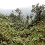 Dense jungles