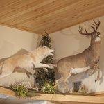 Arctic Wolf and Saskatchewan Whitetail in Gift Shop