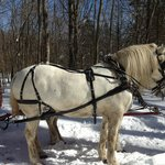 Allegra Farm And The Horsedrawn Carriage And Sleigh Museum Of New England