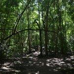 pretty jungle...