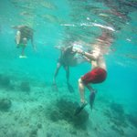**Forgot to say snorkel gear provided for nominal  fee-$8pp when we were there**