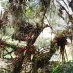 In Orquideas Moxviquil