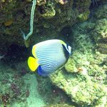 Diving Kuta Lombok