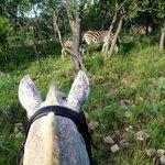 bunzi and the pyama donkeys