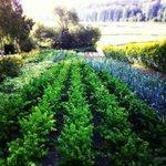 Trädgården med grönsaksodling