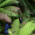 Hike nearby with Tassie Bound guide (Annette can arrange)