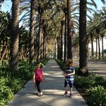 Easy and beautiful shaded walk to Disneyland. About 3km.