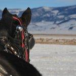 Horse drawn sleigh
