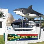 Hai-Attrappe beim Eingang zum Office von SharkLady