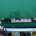 Hai-Käfig