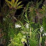 la végétation sur la terrasse