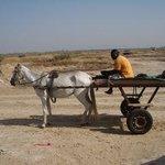 mit Pferdewagen unterwegs