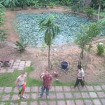 L'étang en face des chambres