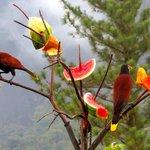 Bird feeders on Lodge grounds.