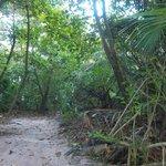 Small trail at Villas