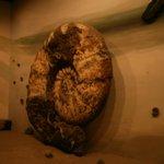 Replica de ammonites:casi un simbolo de las extinciones en el planeta tierra.