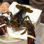 Package Dinner - Hello lobster!