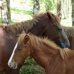 The Horses of Bluff Beach Retreat
