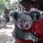 Animal 'tour' with Mathilda the koala, and ranger Tony