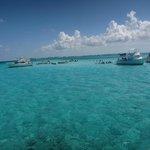Stingray City , Cayman Islands