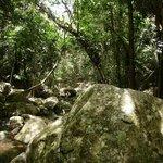 Flora tropical, Ilha Grande