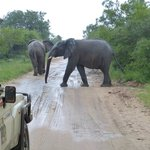 Elephants crossing our path.