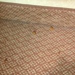 Dirty carpet and dog food from previous occupant