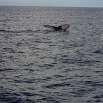 whale from whale watching tour