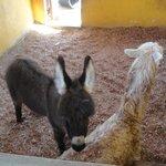 """Donny"" the baby donkey!"