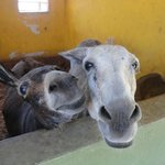 Baby donkey and his mom