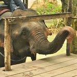 ขี่ช้าง1