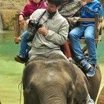 ขี่ช้าง2