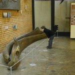 Кусочек древнего кита!