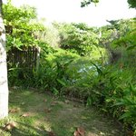 The Green Iguana Sanctuary