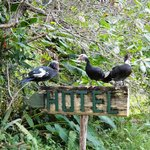 Adopted ducks on a hotel sign