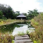 Nature pond and palapa
