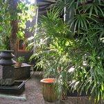 Nice Sri Lanka Plants