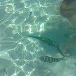 Dando de comer alos peces en la playa