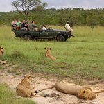 Lions on drive