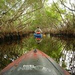 Following Tod through the Mangroves