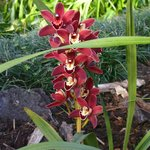 z.b. viele Orchideen i, Botanischen Garten