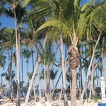 Loved the palm trees on the beach
