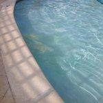 verdrecktes Poolwasser