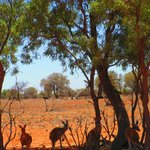 The Great Outback