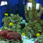 Beautiful Indoor Saltwater Aquarium