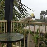 Kakadu visit