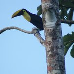 toucans are all around the hotel