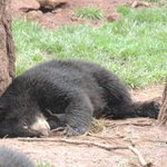 Baby Bear sleeping